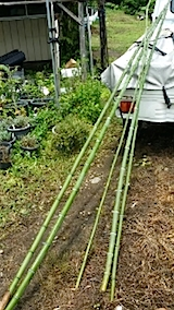 20140711伸びた竹の切り出し