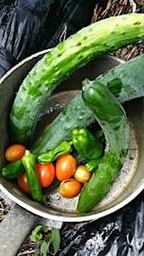 20140711今日収穫した野菜