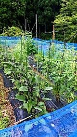 20140711野菜畑