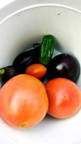 20140715今日収穫した野菜