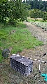 20140715畑周囲の草刈り前