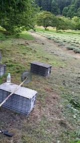 20140715畑周囲の草刈り後