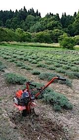 20140715耕作前