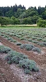 20140715畑を耕す1