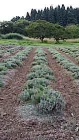 20140715畑を耕す2