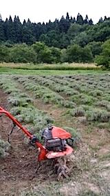 20140715畑を耕す3