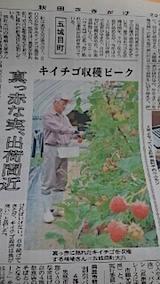 20140717キイチゴ栽培