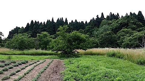 20140717草刈り前22