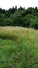 20140717草刈り前1