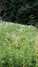 20140717草刈り前2