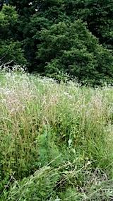 20140717草刈り前3