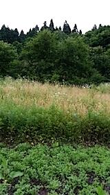 20140717草刈り前5