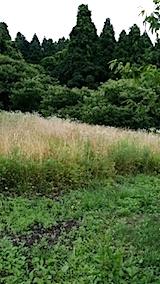 20140717草刈り前6