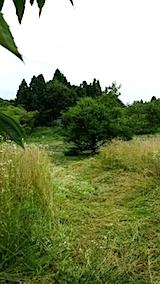 20140717草刈り