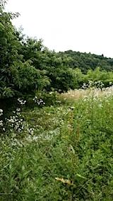 20140717草刈り前7