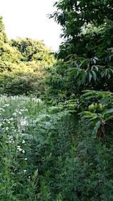 20140717草刈り前13