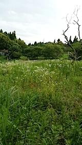 20140717草刈り前10