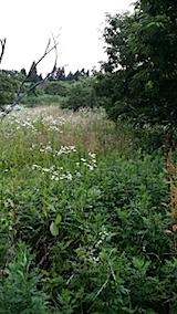 20140717草刈り前11