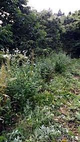 20140717草刈り前12