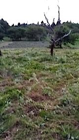 20140717草刈り後10