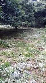 20140717草刈り後12