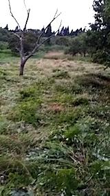 20140717草刈り後11