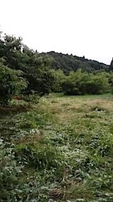 20140717草刈り後7