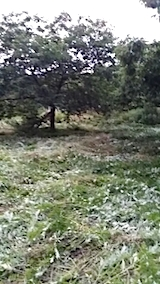 20140717草刈り後9