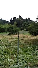20140717草刈り後8