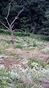 20140717草刈り後2