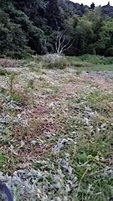 20140717草刈り後3