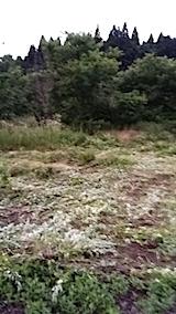 20140717草刈り後4