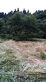 20140717草刈り後5