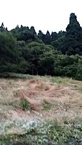 20140717草刈り後6