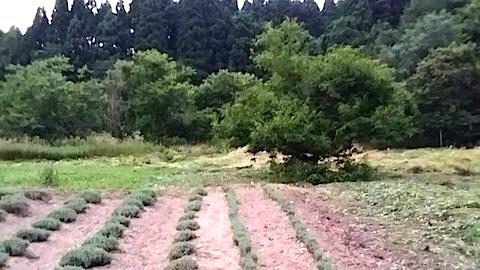 20140717草刈り後22