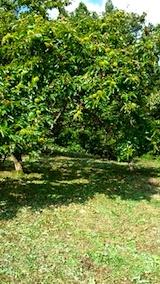 20140910昨日草刈りした場所の様子