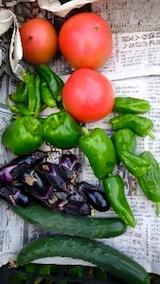 20140911収穫した野菜