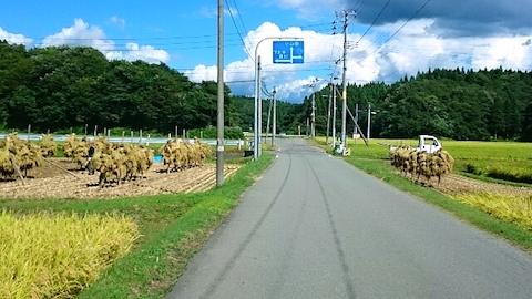 20140913稲刈り2