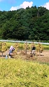 20140913稲刈り1