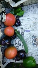 20140913収穫した野菜