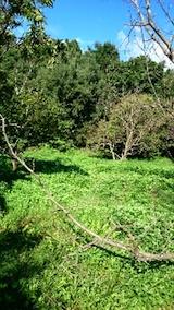 20140913栗畑の草刈り前2