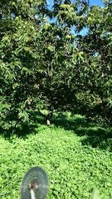 20140913栗畑の草刈り前3