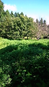 20140913栗畑の草刈り前4