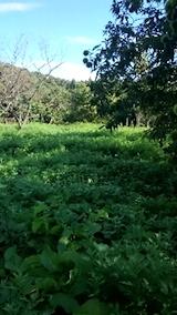 20140913栗畑の草刈り前5