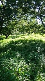 20140913栗畑の草刈り前6