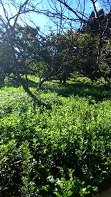 20140913栗畑の草刈り前8