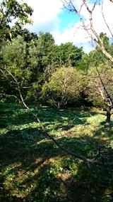20140913栗畑の草刈り後2