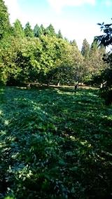 20140913栗畑の草刈り後4