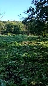 20140913栗畑の草刈り後5