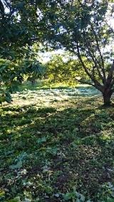 20140913栗畑の草刈り後6